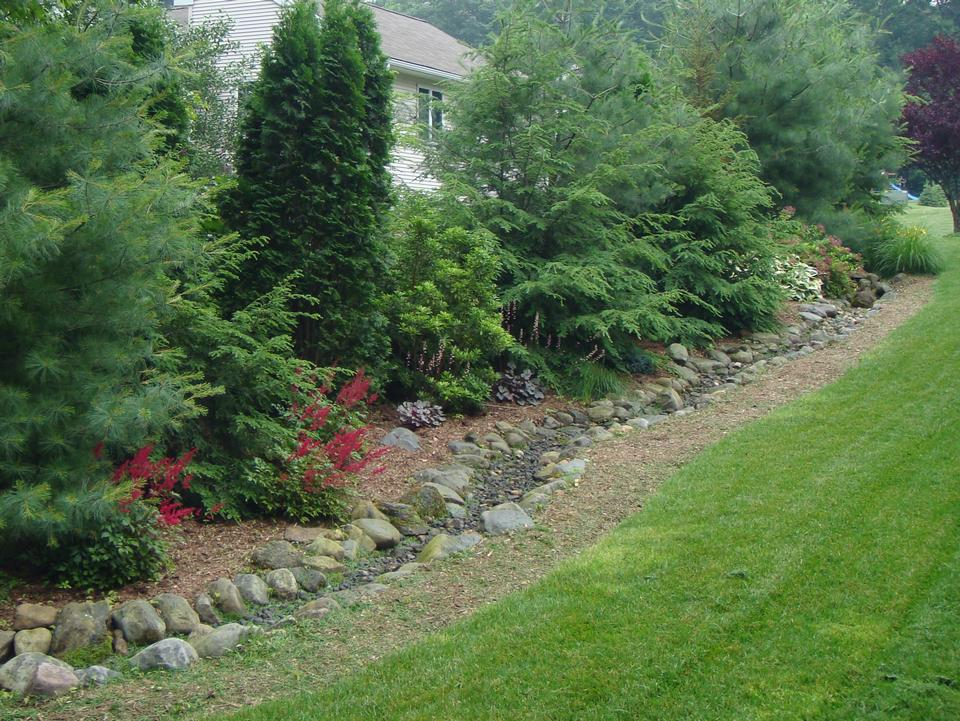 Clarke landscapes for Backyard privacy landscaping trees